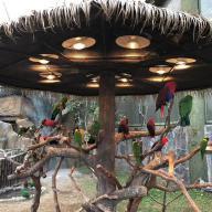 @jianchengfeng