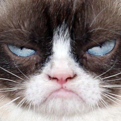GrumpyMeow