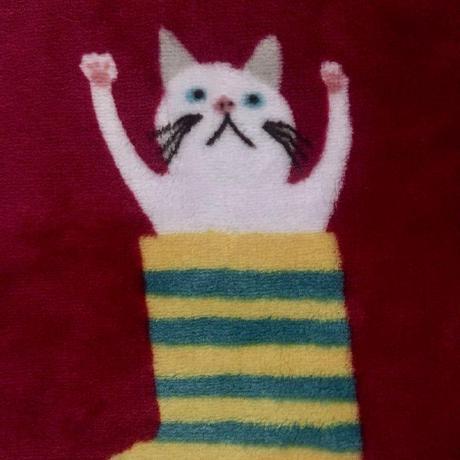 fuzzythecat ( fuzzythecat )