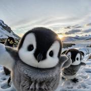 @ankitsharma07