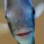 @filterfish
