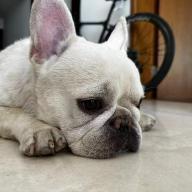 @kaitian521