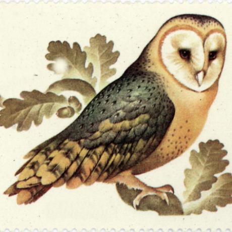 waldvogel