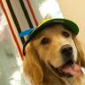 @data-pup