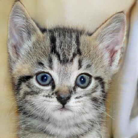 Avatar of Alexandre Gomes