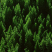 @RecursiveForest