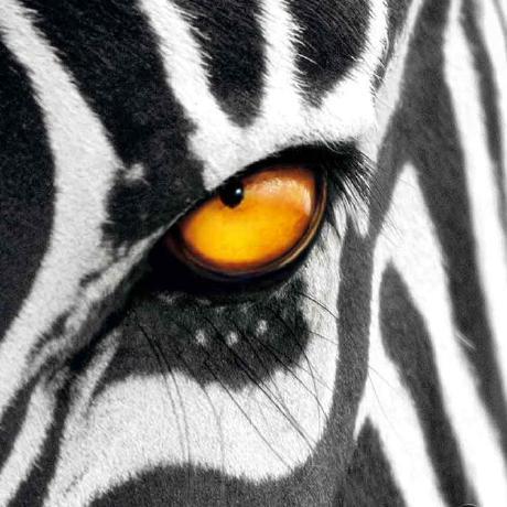 random-zebra (random zebra) · GitHub