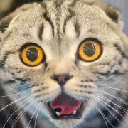 @local-cat