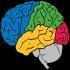 @brain-research