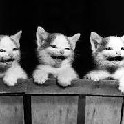 @third-meow