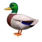rjchow's avatar