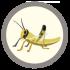 @coderwall-locust