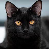 António P. P. Almeida