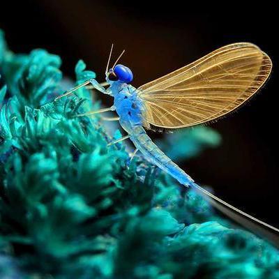 coolEphemeroptera