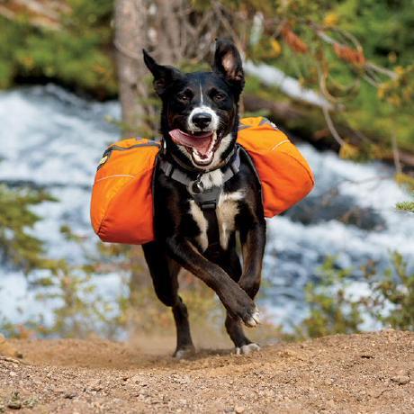 cargodog
