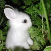 @thewhiterabbit