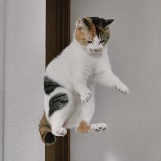 Tae Kwon Kim