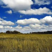 @liuzhengyang