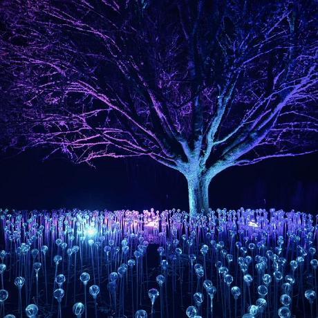 Bethany Nicolle Griggs's avatar